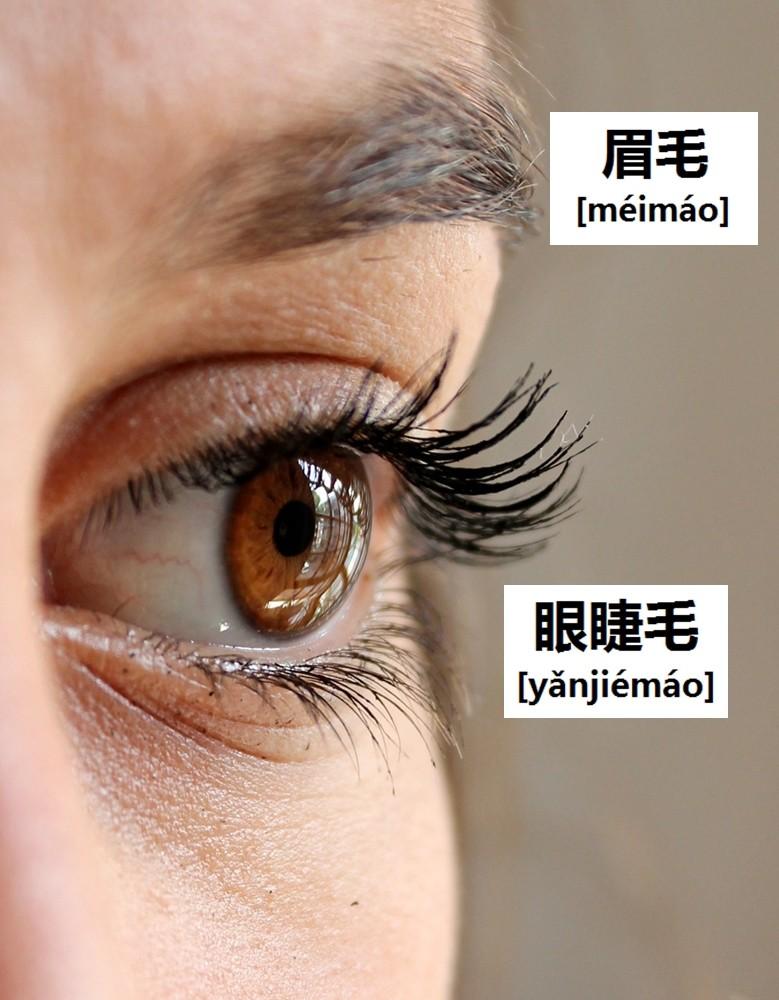 ขนตา (1)