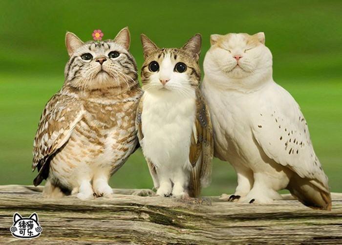นกเค้าแมว เรียนภาษาจีน จากศัพท์แมวแมว