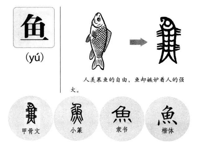 鱼 -  形象字