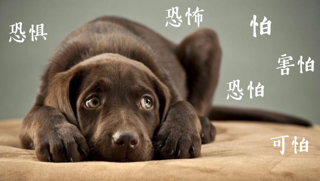 6-กลัว-ใน ภาษาจีน